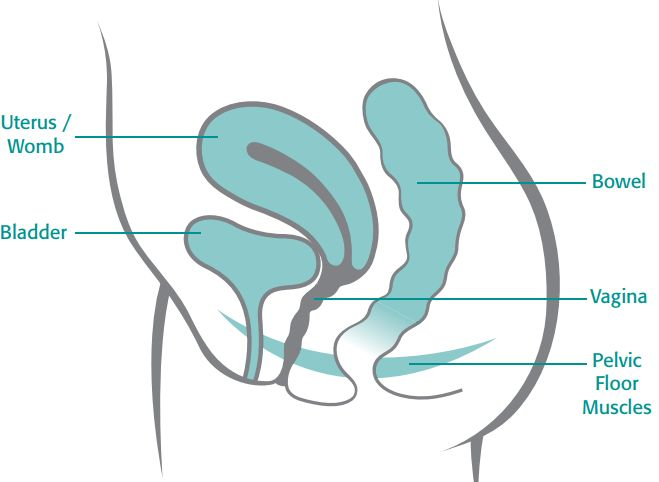 The pelvic floor works to support the uterus, bowel and bladder