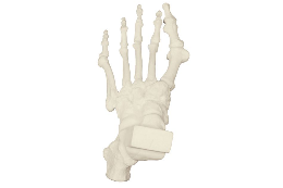 3B Scientific Bone Replicas