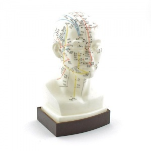 Acupuncture Model of the Head