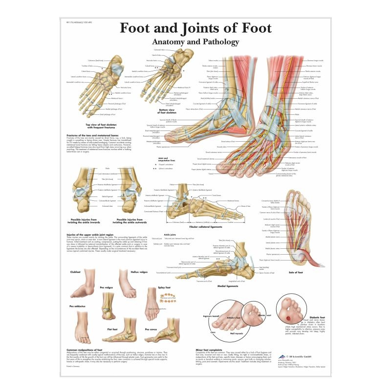 Foot And Ankle Anatomy Chart Paper Medicalsupplies